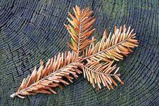 Free Spruce Twig Royalty Free Stock Image - 34784806