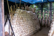 Free Mushroom Plantation Stock Image - 34787141