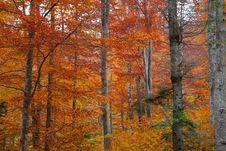 Free Autumn Forest Stock Photo - 34788430