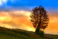 Free Tree In Morning Stock Photography - 34791752