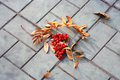 Free Autumn Royalty Free Stock Image - 3482576