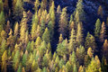 Free Fall Forest Stock Image - 3482911