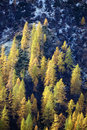 Free Fall Forest Stock Photography - 3482922