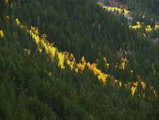 Free Yellow Streak Stock Image - 3480351