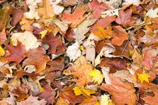 Free Carpet Of Leaves Stock Photography - 3481262