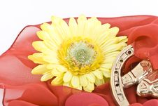 Free Composition With Flowers. Royalty Free Stock Images - 3481769