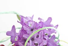 Free Composition With Flowers. Royalty Free Stock Photo - 3481815