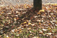 Free Leaf Royalty Free Stock Photo - 3482655
