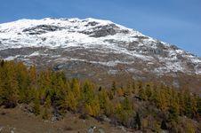 Free Mountain Tree Fall Stock Photography - 3482772