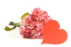 Free Carnation Bouquet Stock Images - 3482824