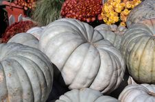 Pile Of White Pumpkins Stock Images