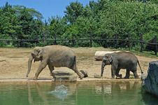 Free Mother And Baby Elephant Walk Stock Image - 3484021