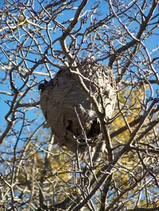 Hornet S Nest Royalty Free Stock Photography