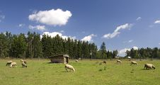 Free Grazing Sheep Stock Photography - 3487752