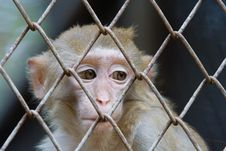 Free Monkey Stock Photography - 3488782