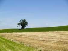 Free Small Tree On The Green Field Stock Image - 3489401