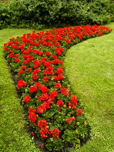 Red Flowers In Royal Park Royalty Free Stock Photo