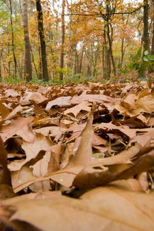 Free Fallen Leaves In The Woods Royalty Free Stock Photography - 3489507