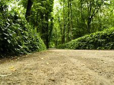 Free Path In Royal Park - Warsaw Royalty Free Stock Images - 3489529