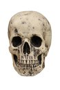 Free Human Skull. Royalty Free Stock Image - 34800666