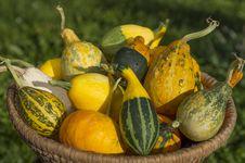 Free Vegetable Marrow. Stock Photos - 34801893