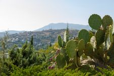 Free Crimean Coast. Cacti. Royalty Free Stock Image - 34803006