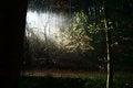 Free Sunbeam Royalty Free Stock Image - 34812486