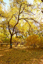 Free A Autumn Tree In The Park Stock Photo - 34819490