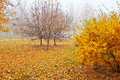 Free The Autumn Trees In The Mist Royalty Free Stock Photography - 34819627