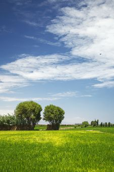 Free Two Trees In The Field With Wonderful Clouds Stock Photos - 34817543