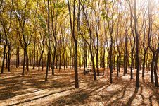 Free The Autumn Forest Royalty Free Stock Photo - 34818995