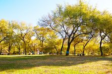 Free The Autumn Forest Public Garden Stock Image - 34819561