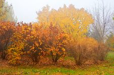 Free The Fall Trees In The Mist Stock Photos - 34819673