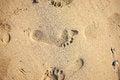 Free Footprints On Sand Stock Photos - 34832423