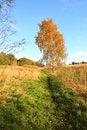 Free Beautiful Autumnal Landscape Royalty Free Stock Photo - 34836005