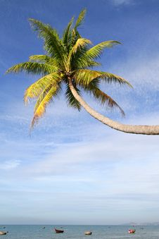 Free Palm Tree Over Water Royalty Free Stock Photos - 34831178