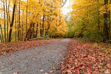 Free Autumn In The Forest Stock Images - 34832014