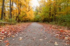 Free Autumn In The Forest Stock Photography - 34832022