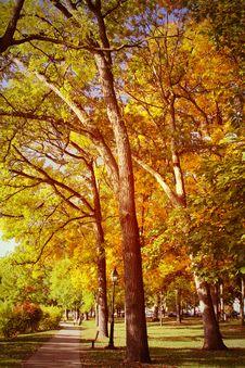 Free Autumn Scene Royalty Free Stock Photography - 34836237