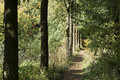 Free Forest Path Royalty Free Stock Photography - 34840487