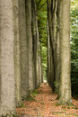 Free Forest Path Stock Photo - 34840550
