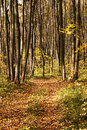 Free Road Into Autumn Forest Royalty Free Stock Images - 34849029