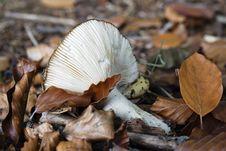 Broken Mushroom Stock Photo