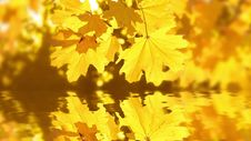 Free Autumn Reflection Royalty Free Stock Photography - 34846887