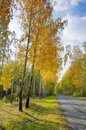 Free Alley In The Forest Park Area. Stock Image - 34859911