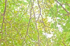 Free Green Leaves Royalty Free Stock Image - 34851756
