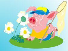 Free Swine Stock Image - 34856961