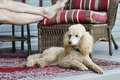 Free Relaxing On A Dog Day Afternooon Royalty Free Stock Photo - 34862775