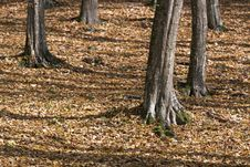 Free Forest Detail In Autumn Royalty Free Stock Photography - 34862377