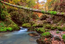 Creek Deep In Mountain Forest Royalty Free Stock Images